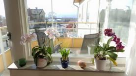 Lyxig lägenhet på 2 plan med havsutsikt, bara 800 meter från Almedalen