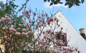Boka 2019 - Litet hus - Toppenläge - Visby innerstad